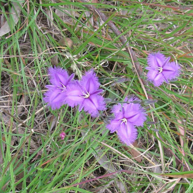 Farmgate Natives– Growing Native Plants Locally for the Local Growing Conditions